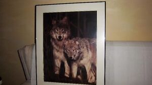 Wolf  Pictures Kitchener / Waterloo Kitchener Area image 3