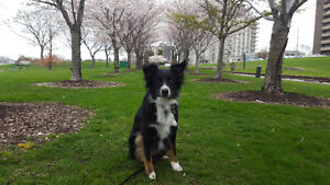 The Sophisticated Dog - Dog Walker, Pet Sitter, Trainer Sarnia Sarnia Area image 7