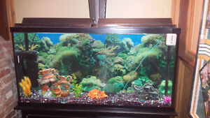 70 gal fish tank for sale