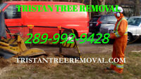 Tree and Stump Removal all location 289 992 9428