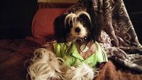 Petits chiens en milieu familial Rive-Sud