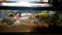 6 hermit crabs with big tank and lots of shells