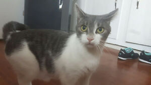 2 cats in need of re-homing