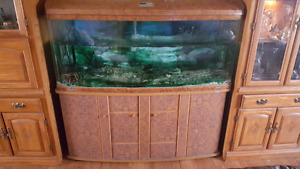 Jebo R3150 150 gallon aquarium