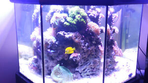 Coral for sale