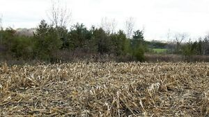 PRIME LOCATION! 47 ACRES ON SAUGEEN RIVER London Ontario image 5
