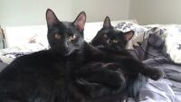 Cute kittens need fur-ever home
