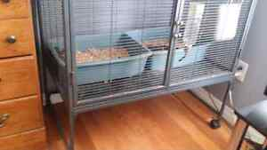 Two ferrets for sale 4 years old