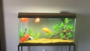55 Gallon fish tank with accessories and cichlids