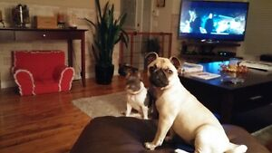 PET SITTING BY TRISH - IN BRIDLEWOOD HOME