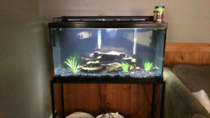 40 Gallon Tank + Accessories