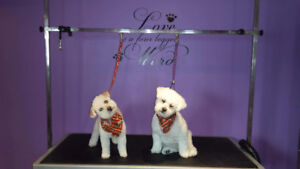 Professional Dog And Cat Groomer With Over 30 Years Exp!!