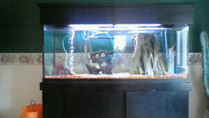 aquarium for sale with fish and all accessorizes