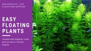 Floater Aquatic Plants for Sale!