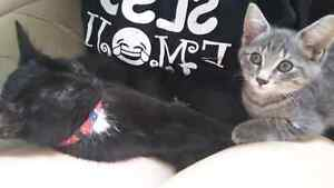 2 Kittens to good homes