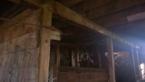 100 Year Old Barn Available for Deconstruction and Wood Recovery Regina Regina Area image 3