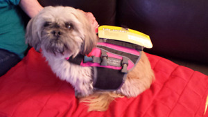 Life Jacket - for small dog