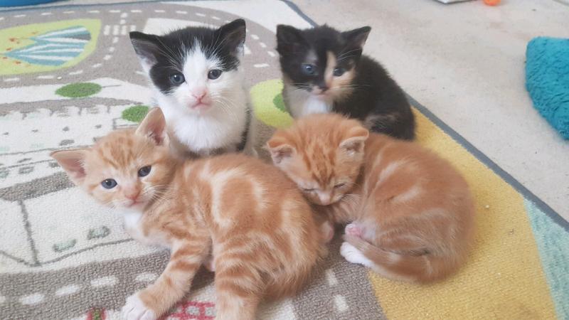 53d135d873 4 kittens for sale