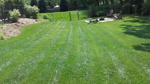 Lawn Care / Grass Cutting / Lawn Maintenance / Fall Clean Up London Ontario image 3