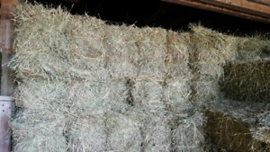 2018 First Cut Hay Small Square Bales