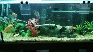 "PRICE REDUCED..!!!! 4"" Fish tank + Stand + Fish + accessories... Angle Park Port Adelaide Area Preview"