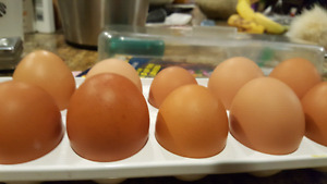 X Large Brown Eggs