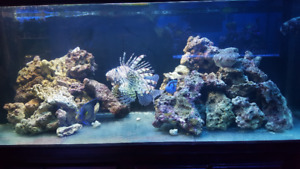 Sealife Central Saltwater Aquariums