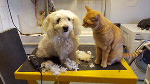 Mobile Pet Grooming Services In The Comfort Of Your Own Home