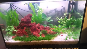 20 gallon dirted  planted tank