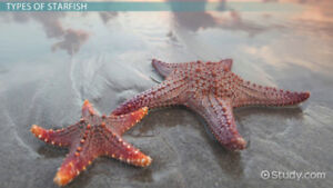 Coloured Seashells And Starfish In Basket-BRAND NEW IN BASKET