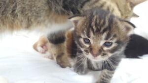 kittens need new home