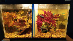 Two 10 gallon tank set ups with fish