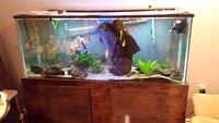 120 Gallon aquarium and stand