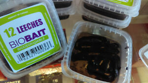 BIO BAIT LEECHES! JUST LIKE THE REAL THING! LIVE BAIT!