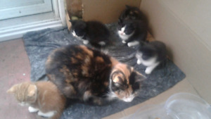 Free mother & OR kittens