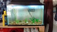 10 gallon aquarium with live plants