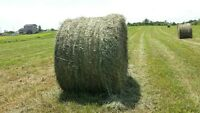 Nice horse quality hay for sale- no rain!