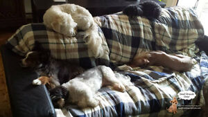 *FULL FOR HOLIDAYS* Dog Daycare & sleepovers for small dogs West Island Greater Montréal image 10