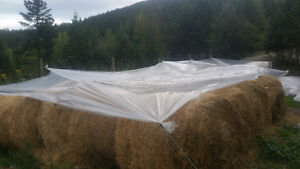 Clear Plastic Tarps (barely used greenhouse plastic)
