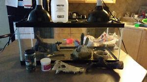 Reptile Terrarium and supplies