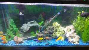 90 gallon everything with cichlids