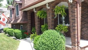 Exceptional home for sale in Sarnia