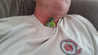 (( Sweet Baby Pacific Parrotlet))