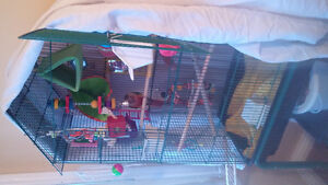 Looking for hand tamed budgie lovebird or parrotlet