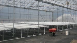 Benches and Trays Equipment Perfect for Greenhouse Farm.