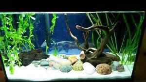 Beautiful aquarium. Just add fish.