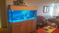 125 Gallon Aquarium for trade