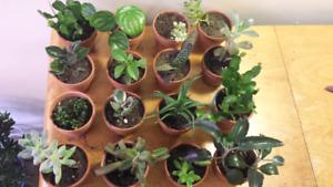 $5 houseplants/succulents for sale!