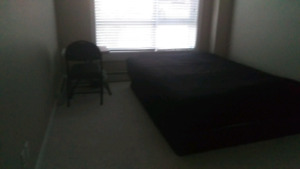Roommate at Skyview apartment