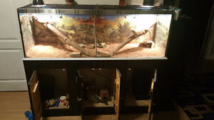 TANK ..×2 BEARDED DRAGONS..SELF TIMMER. Windsor Region Ontario image 5